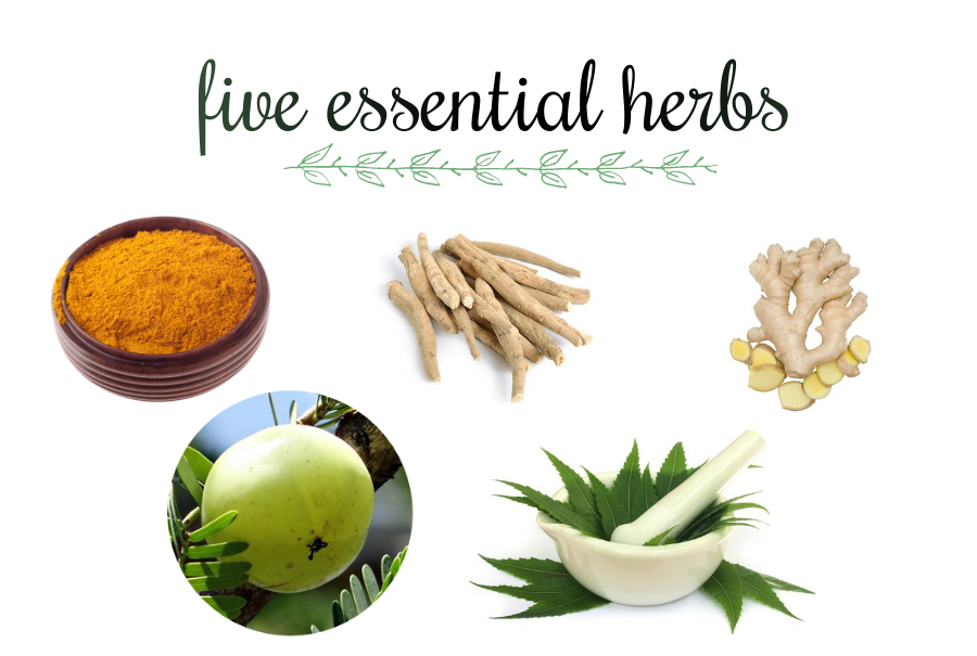 5 Essential Herbs to Boost Your Immunity