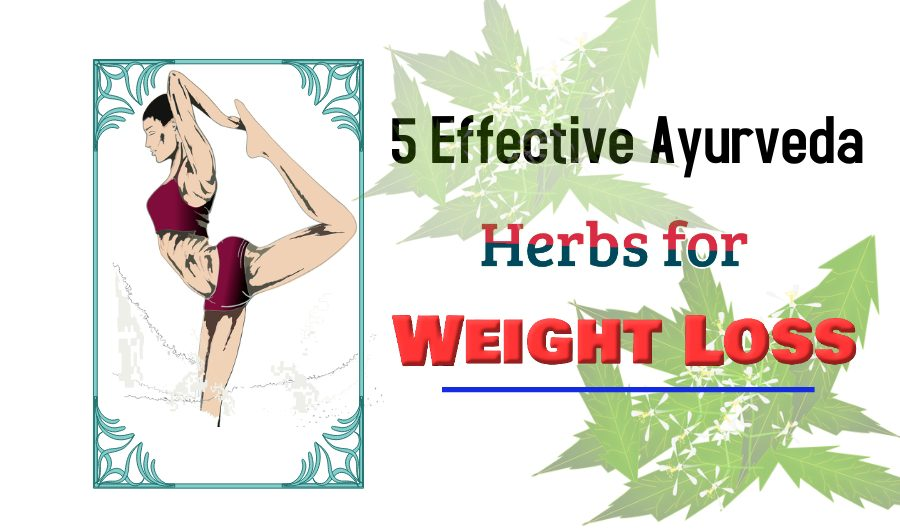 5 Effective Ayurveda Herbs for Weight Loss